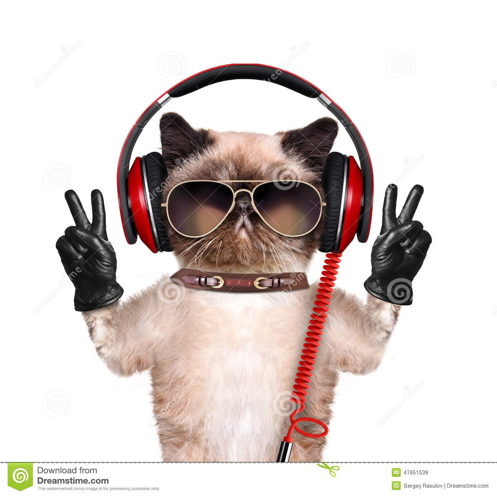 Cat With Headphones | www.imgkid.com - The Image Kid Has It!