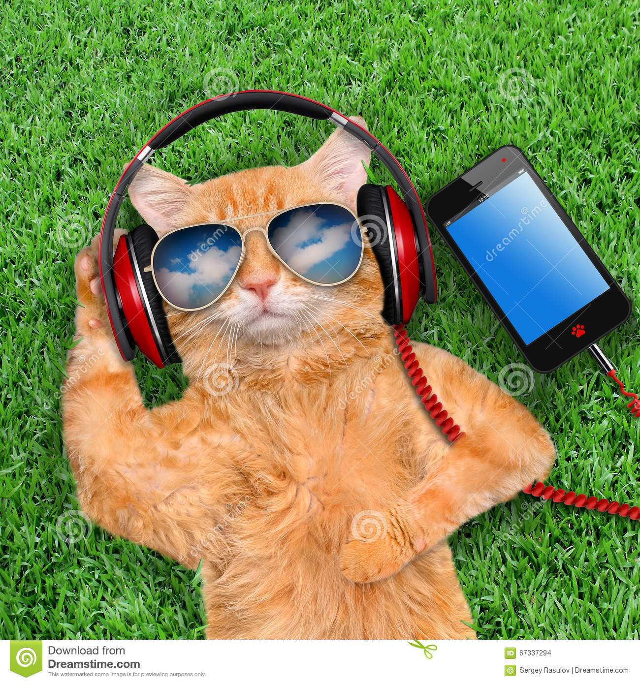 Funny Cat Application Download