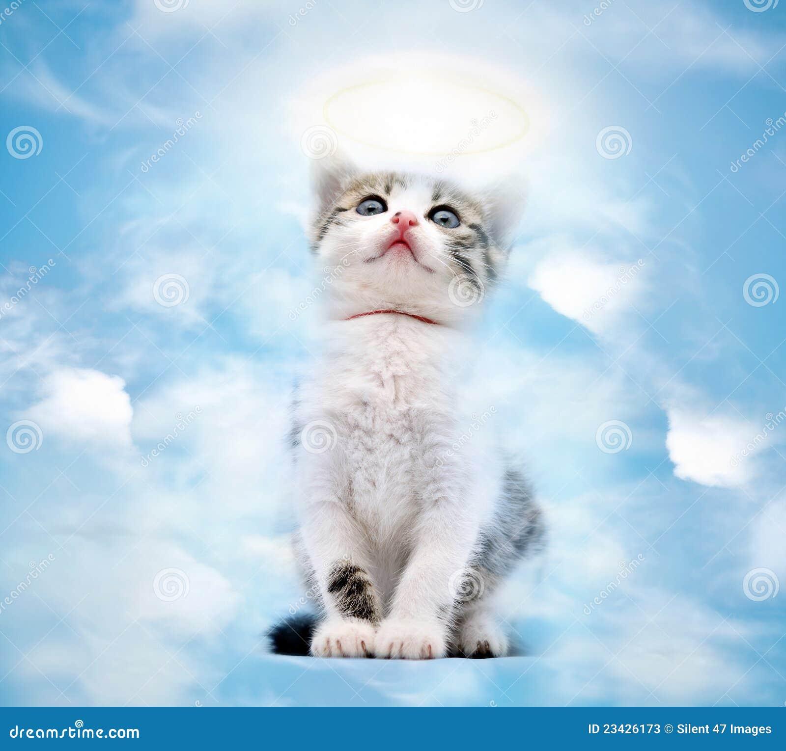Rainbow Bridge Cat Losing A Pet