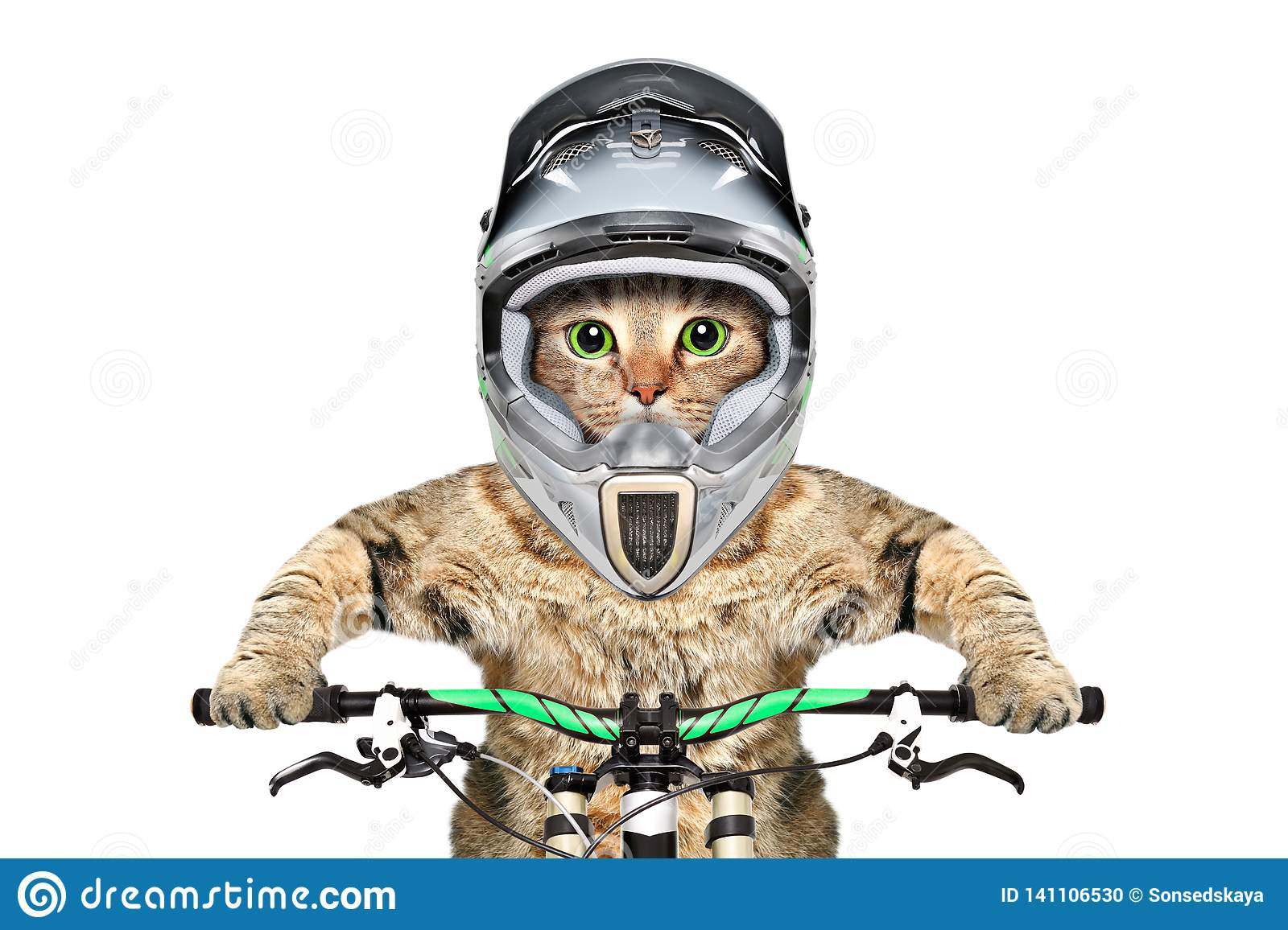 Cat in a helmet on a bicycle
