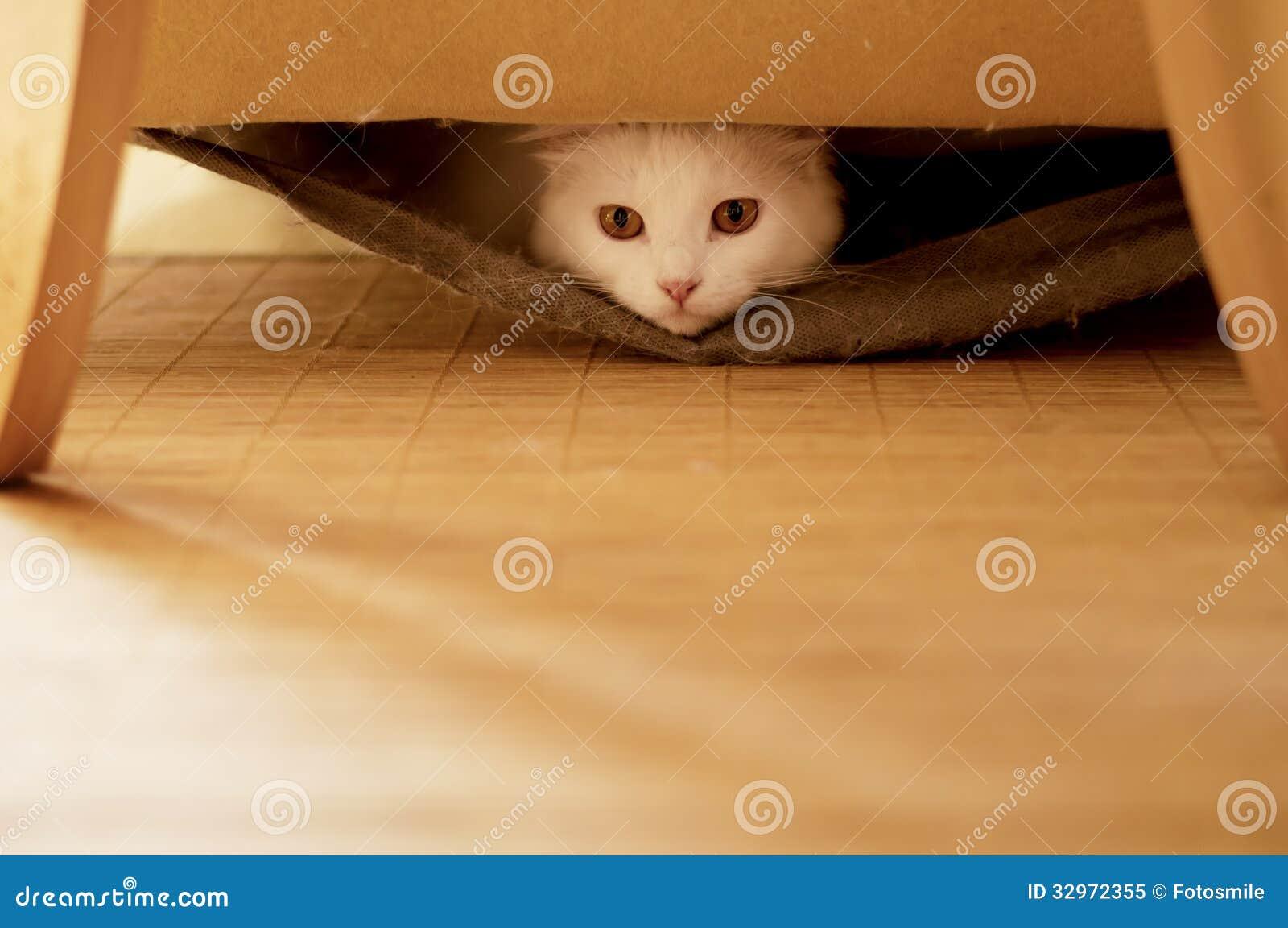 Cat Hiding Royalty Free Stock Photo Image 32972355