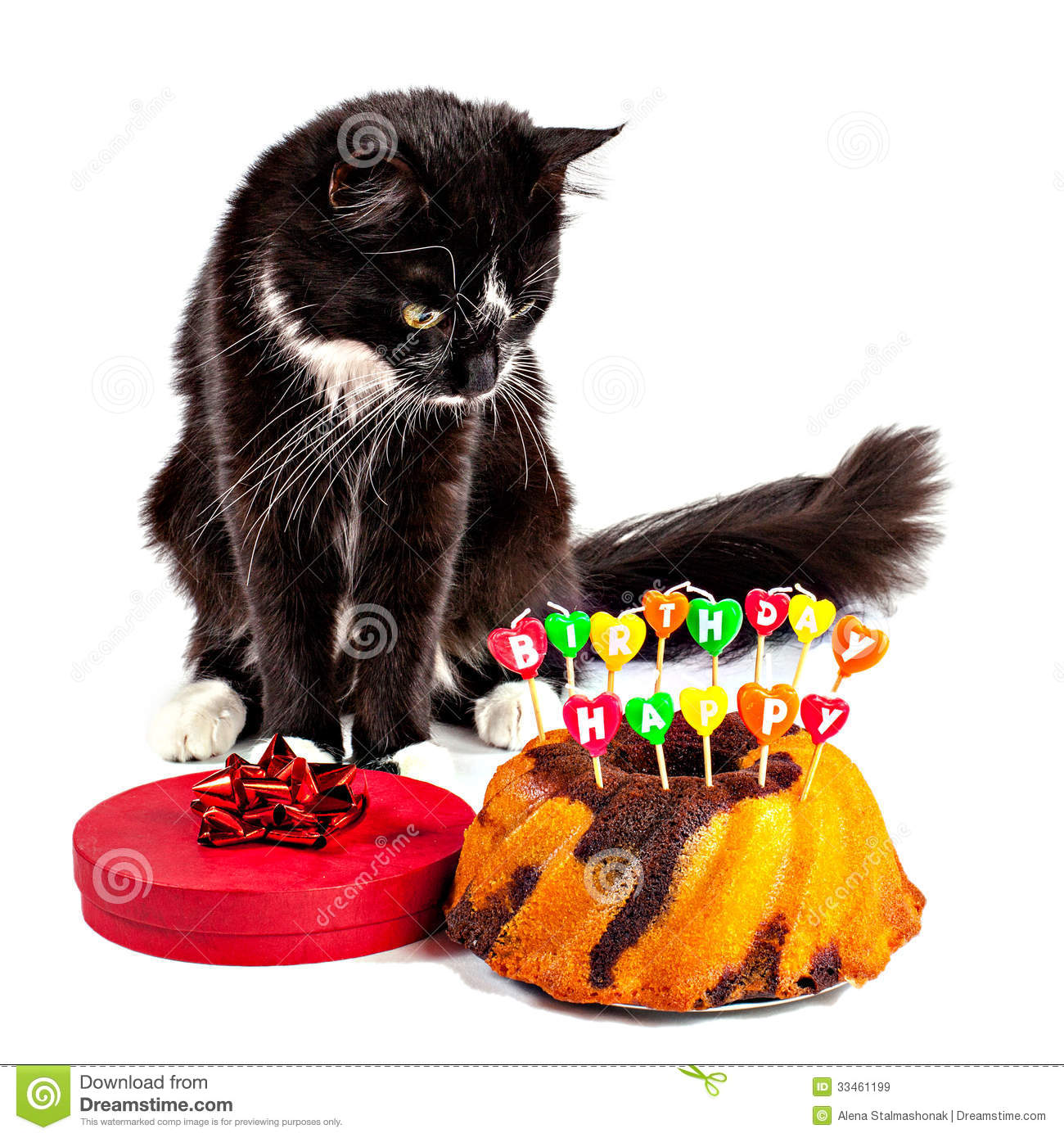 Cat With His Happy Birthday Cake