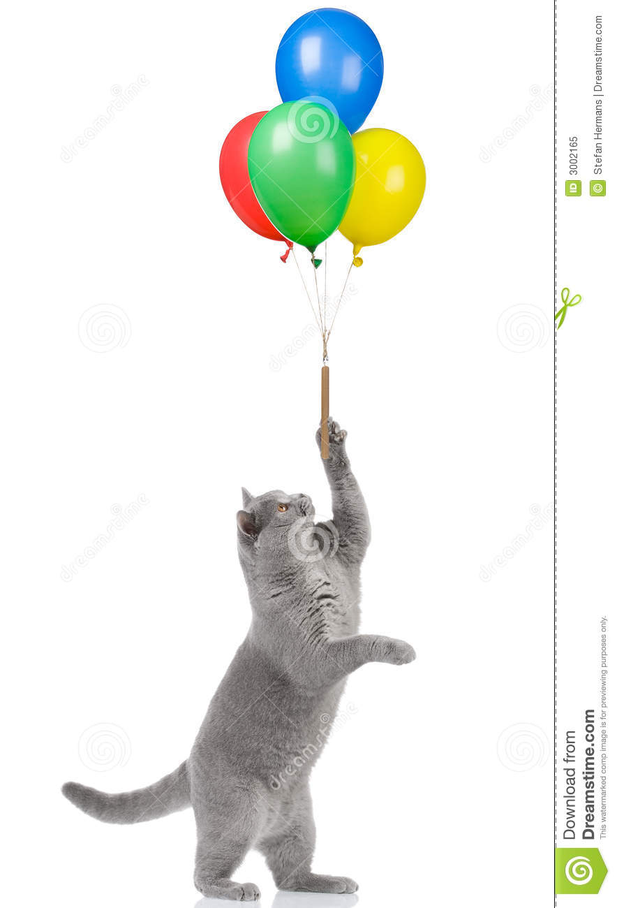 Cat Holding Balloons Royalty Free Stock Photo - Image: 3002165