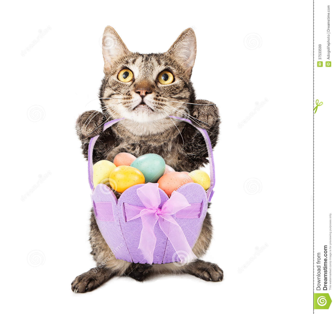 how to cook eggs for cats