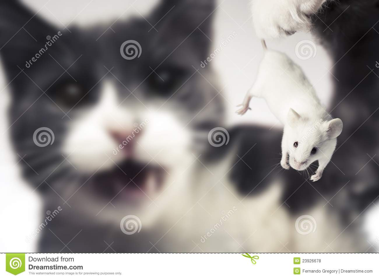 cat holding a mouse about to eat it royalty free stock