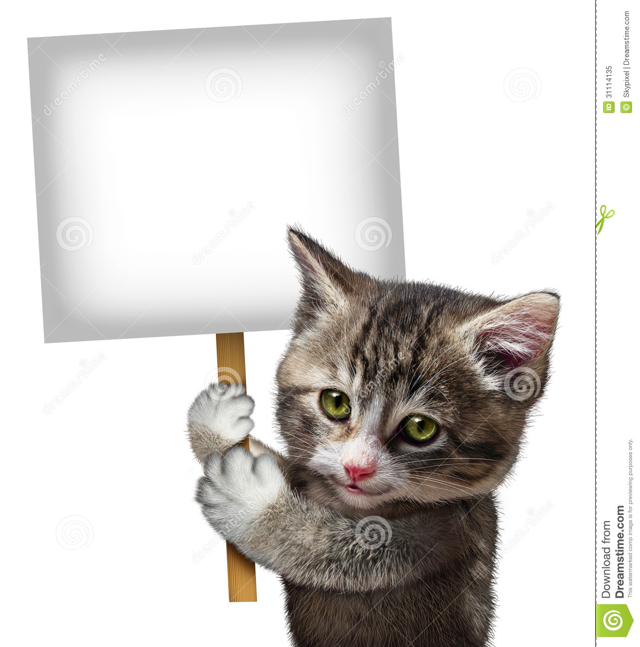 cat holding sign stock illustration image of health