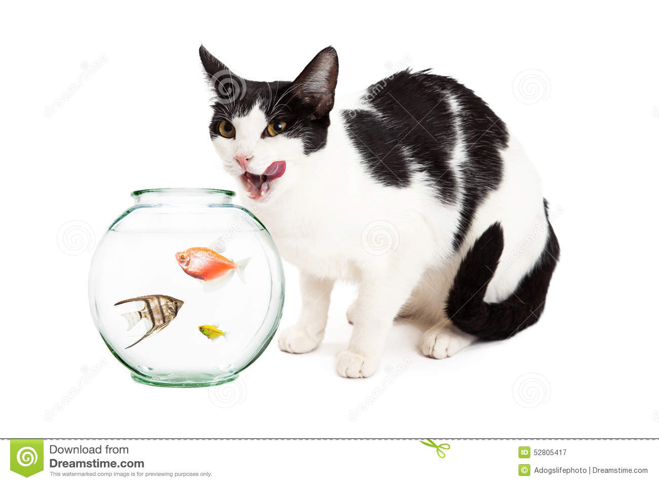 Cat looking into bowl of pet fish royalty free stock photo for Fish bowl pets