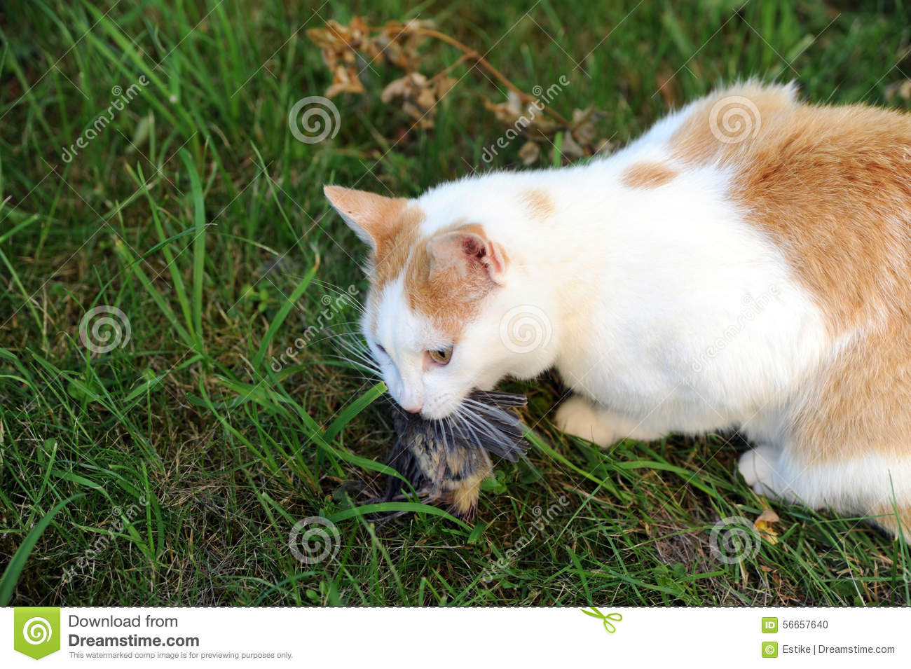 Cat with hunted down bird