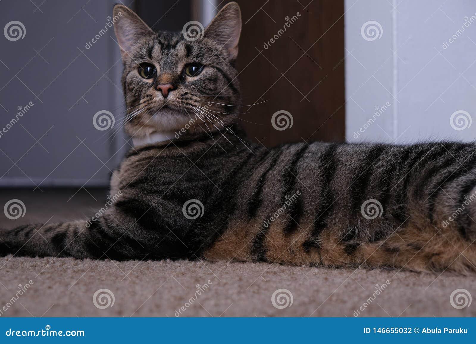Cat Indoors With Surprised Look linda