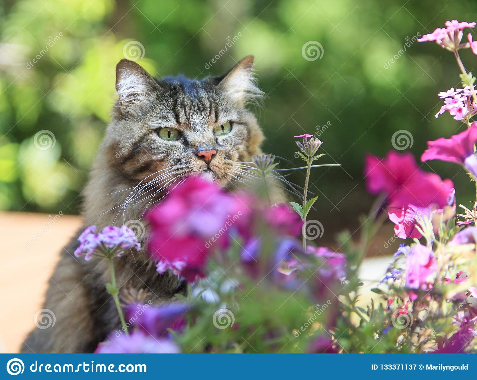 Cat Intently Focused on Small Flower