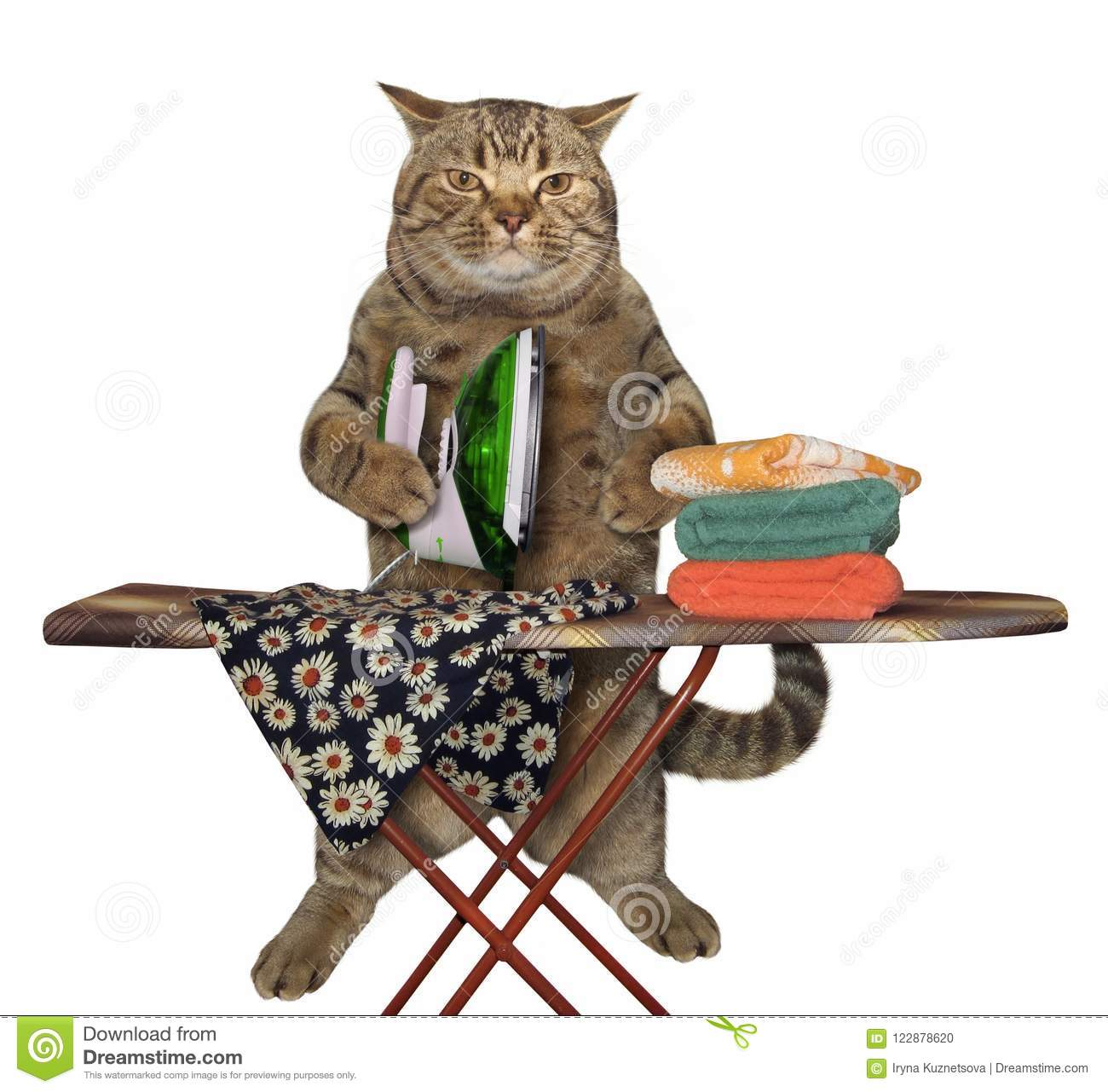 Cat is ironing clothes