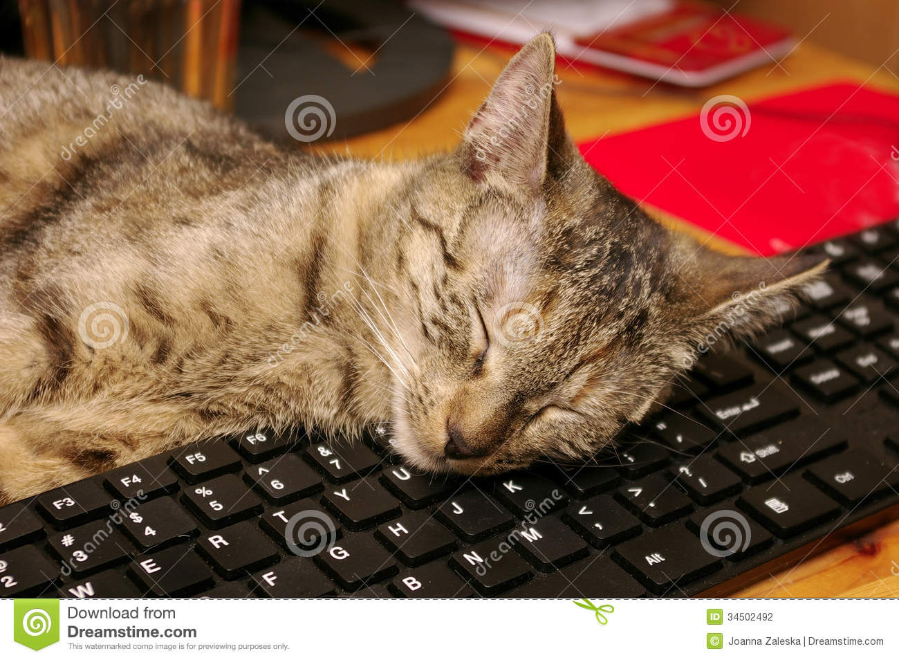 Cat and keyboard stock photo. Image of friend, bored ...