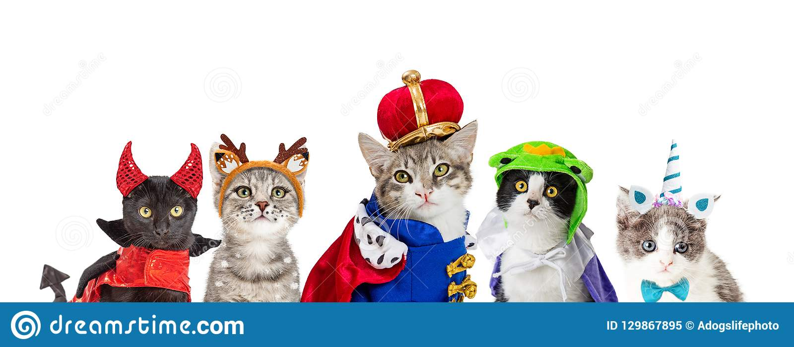 cat in king halloween costume stock image - image of copy, kitten