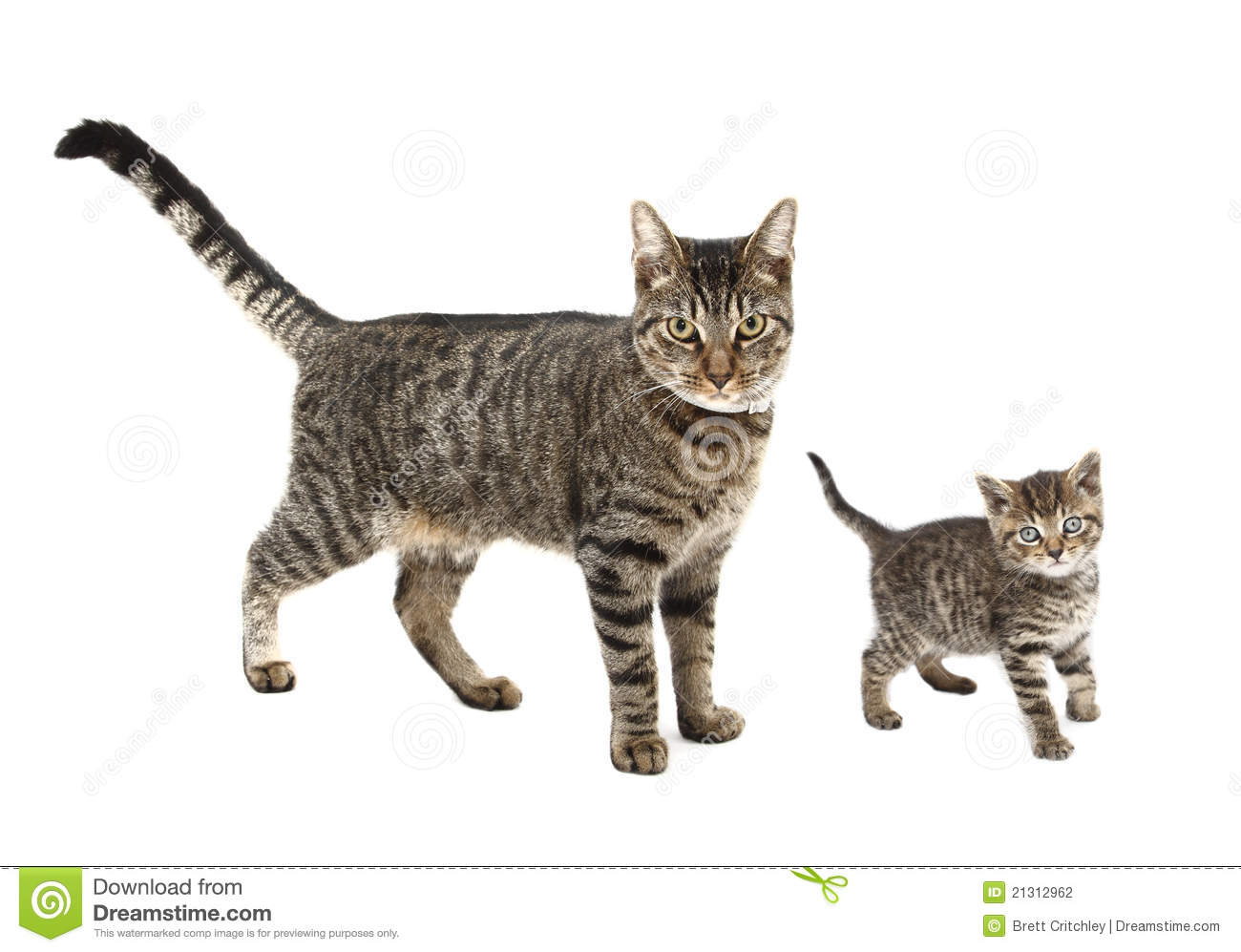 Cat And Kitten Stock Photography Image 21312962
