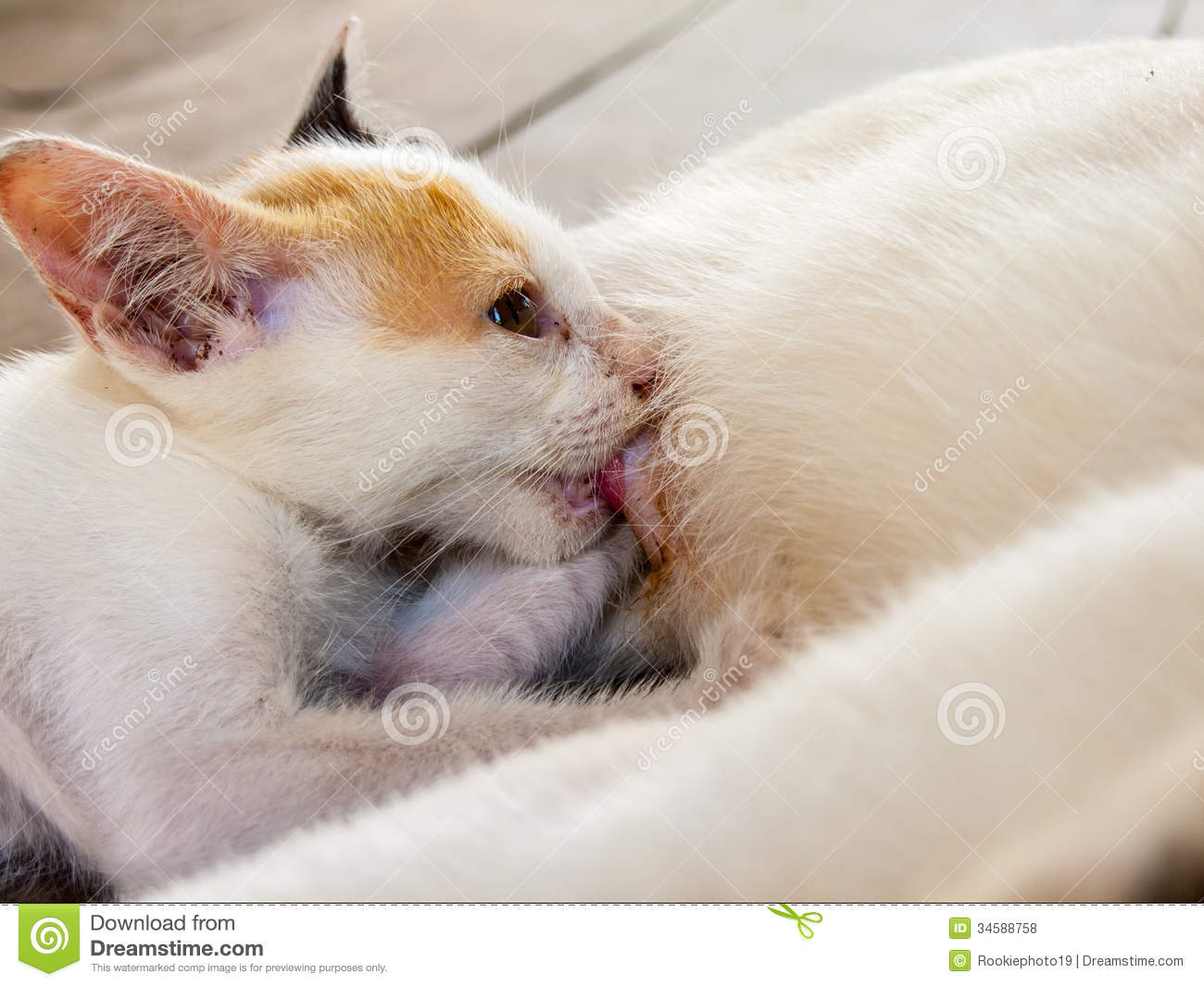 Cat Royalty Free Stock s Image