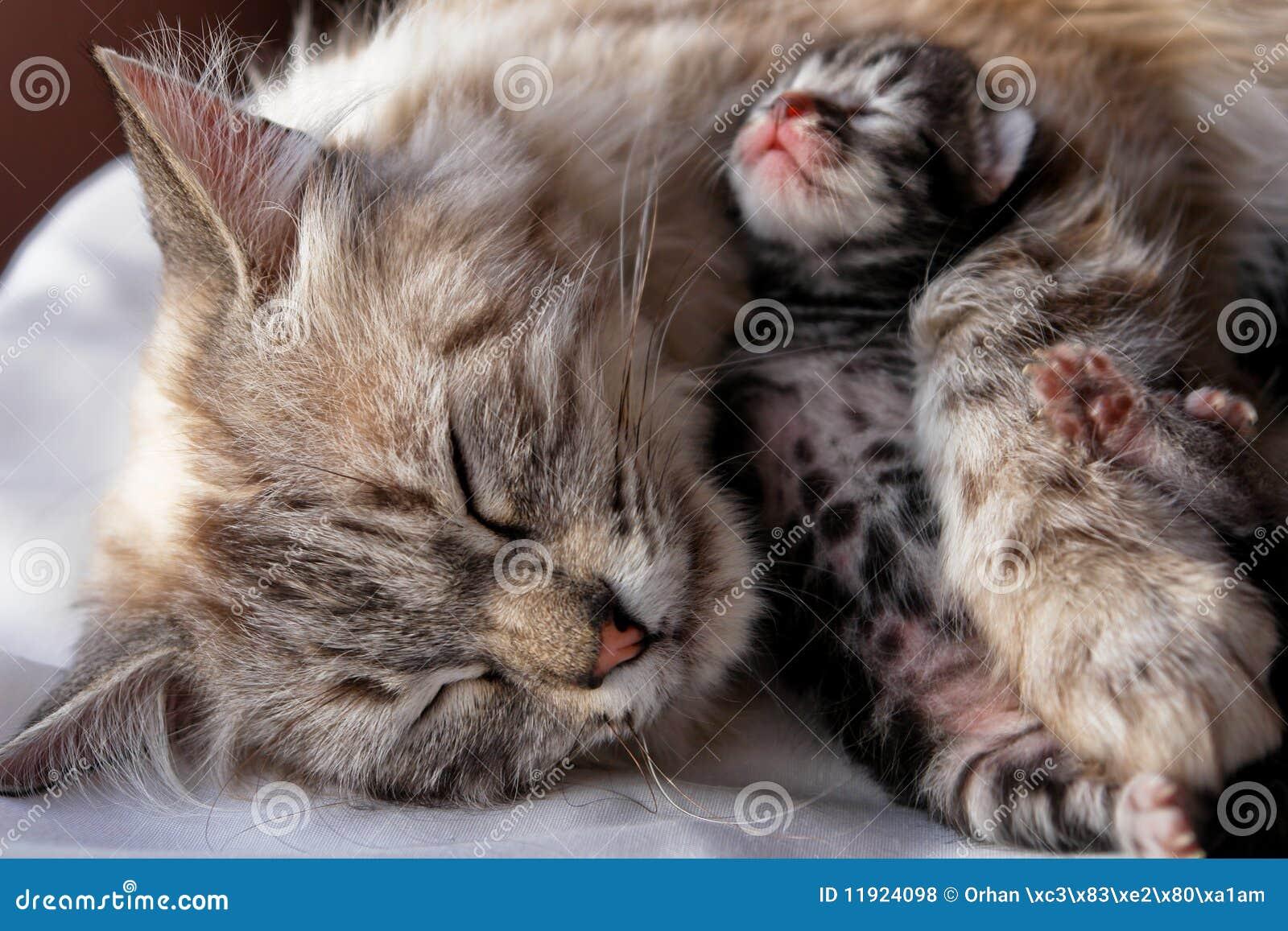 Вызвать в домашних условиях роды у кошки можно при помощи некоторых 60