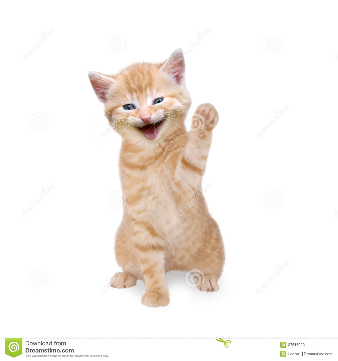 cat kitten laughing and waving stock photo image 37516800