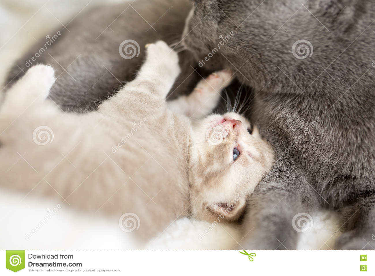 Cat and kitten lying and hugging together