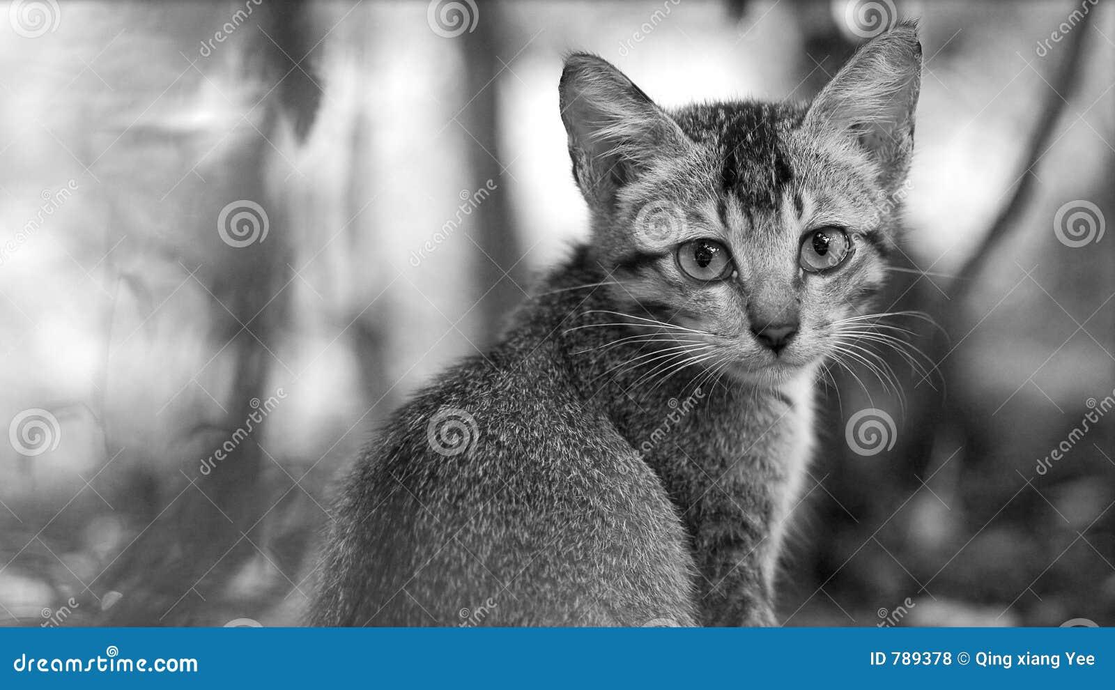 cat kitten photo sad eyes stock photo image 789378