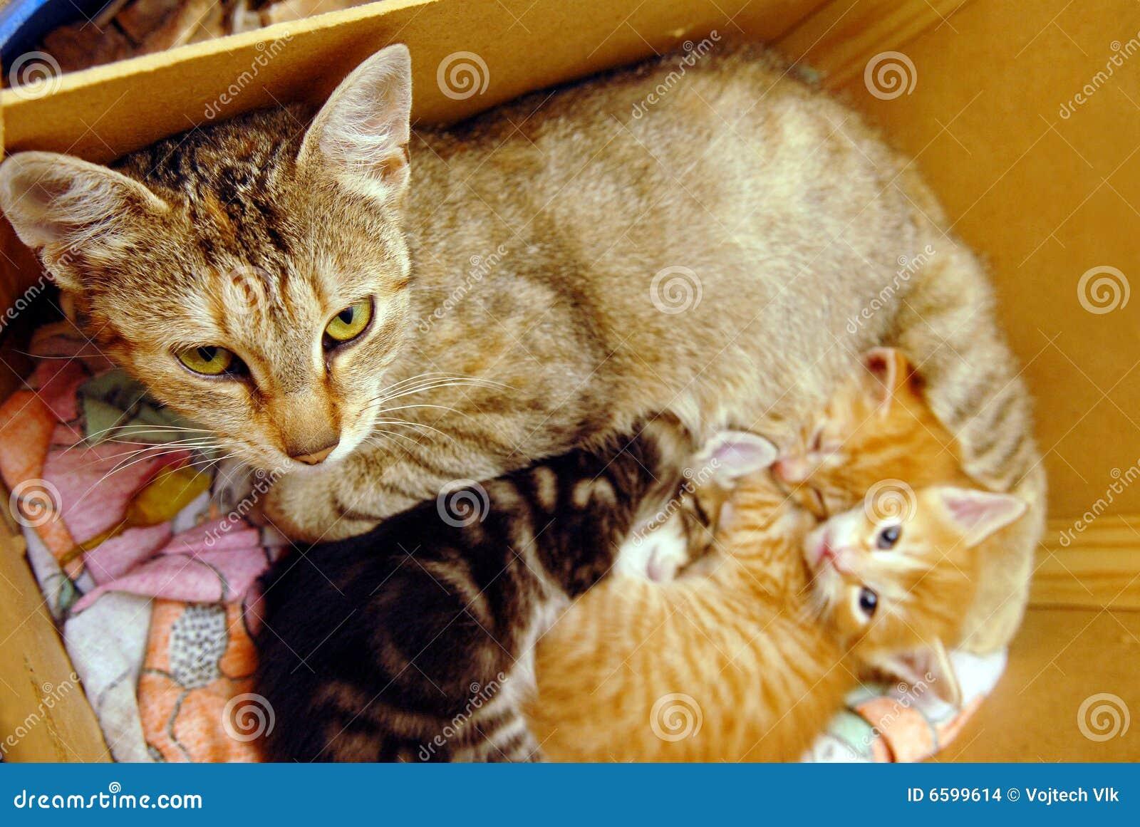 Kitties Stock s 2 117