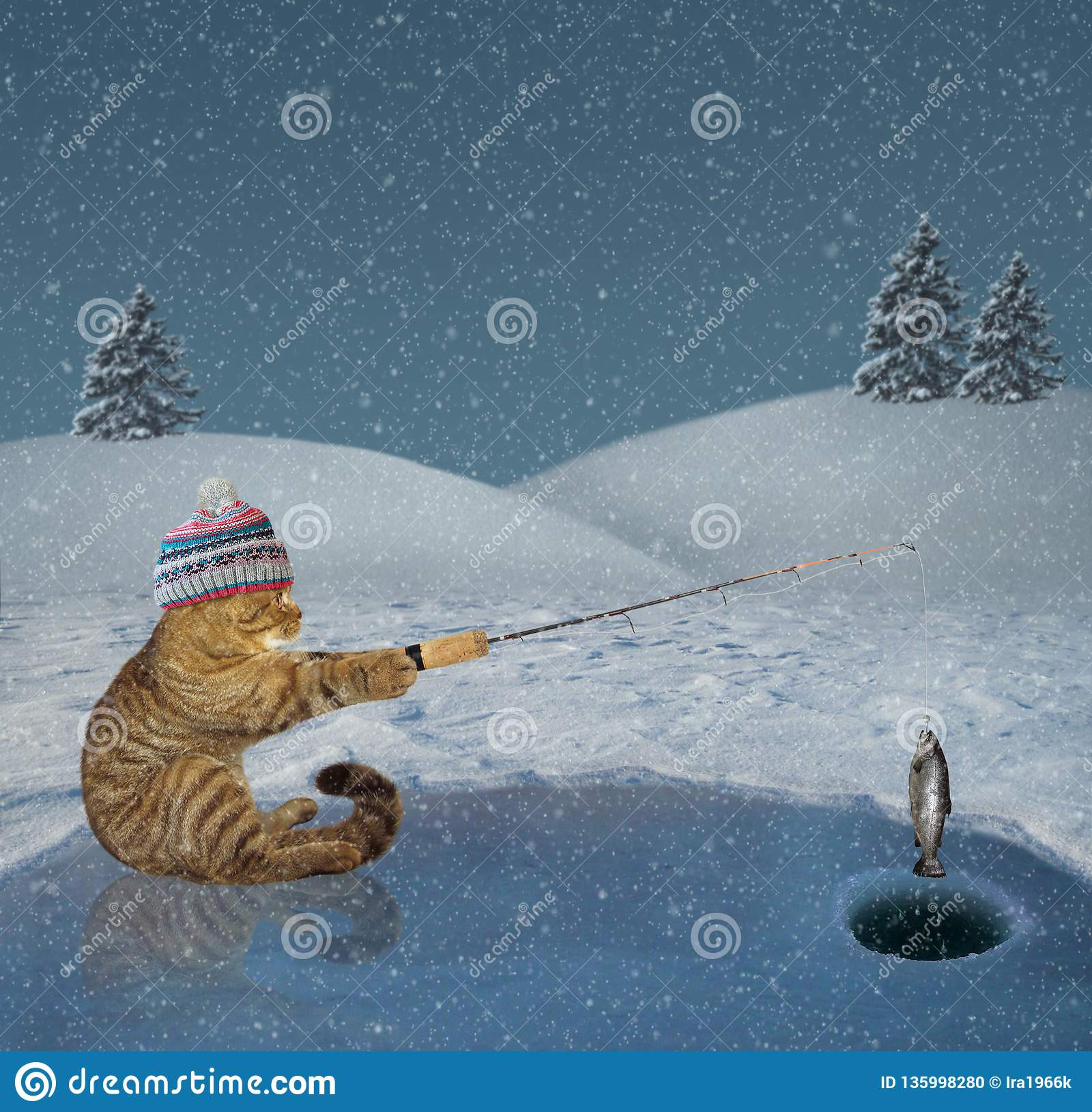 Cat on winter fishing