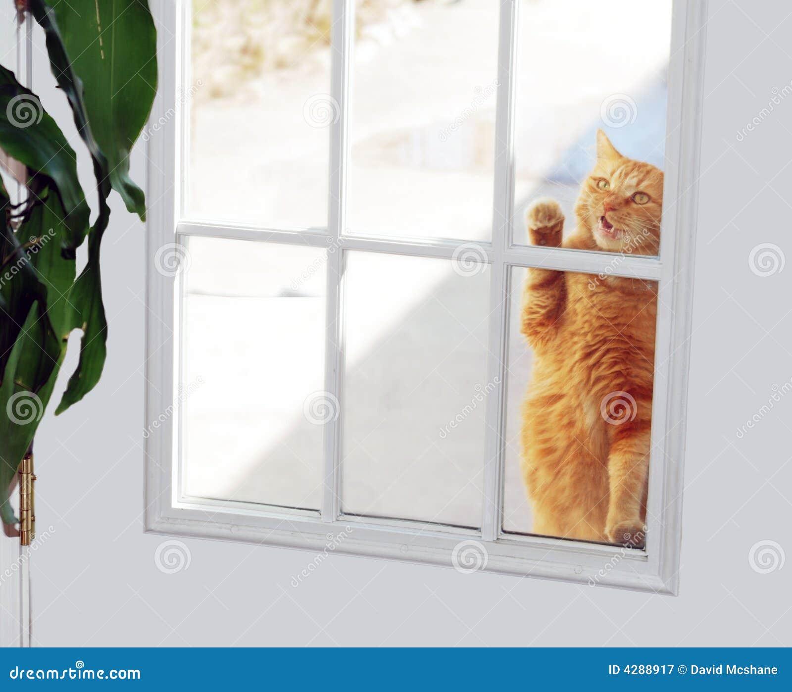 Cat Knocking On Door : Cat knocker royalty free stock photography image