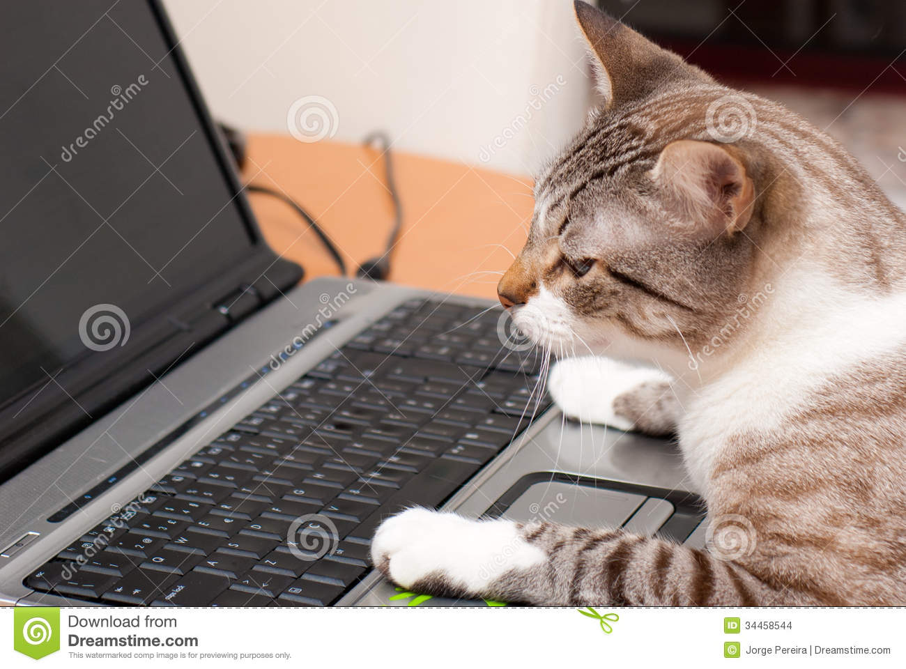 Cat And Laptop Keyboard Stock Images - Image: 34458544
