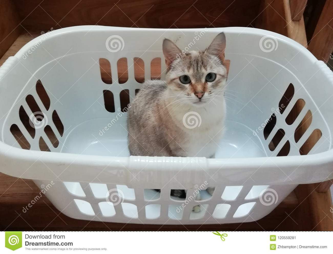 cat in a laundry basket stock image image of basket 120559281