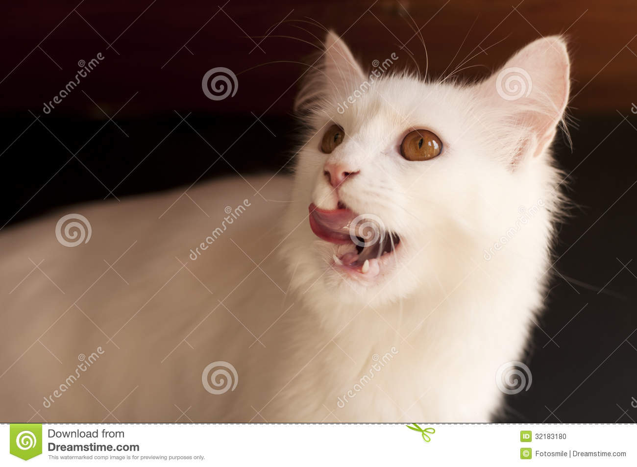 Cat Licking Mouth Naked Pictures Of Women