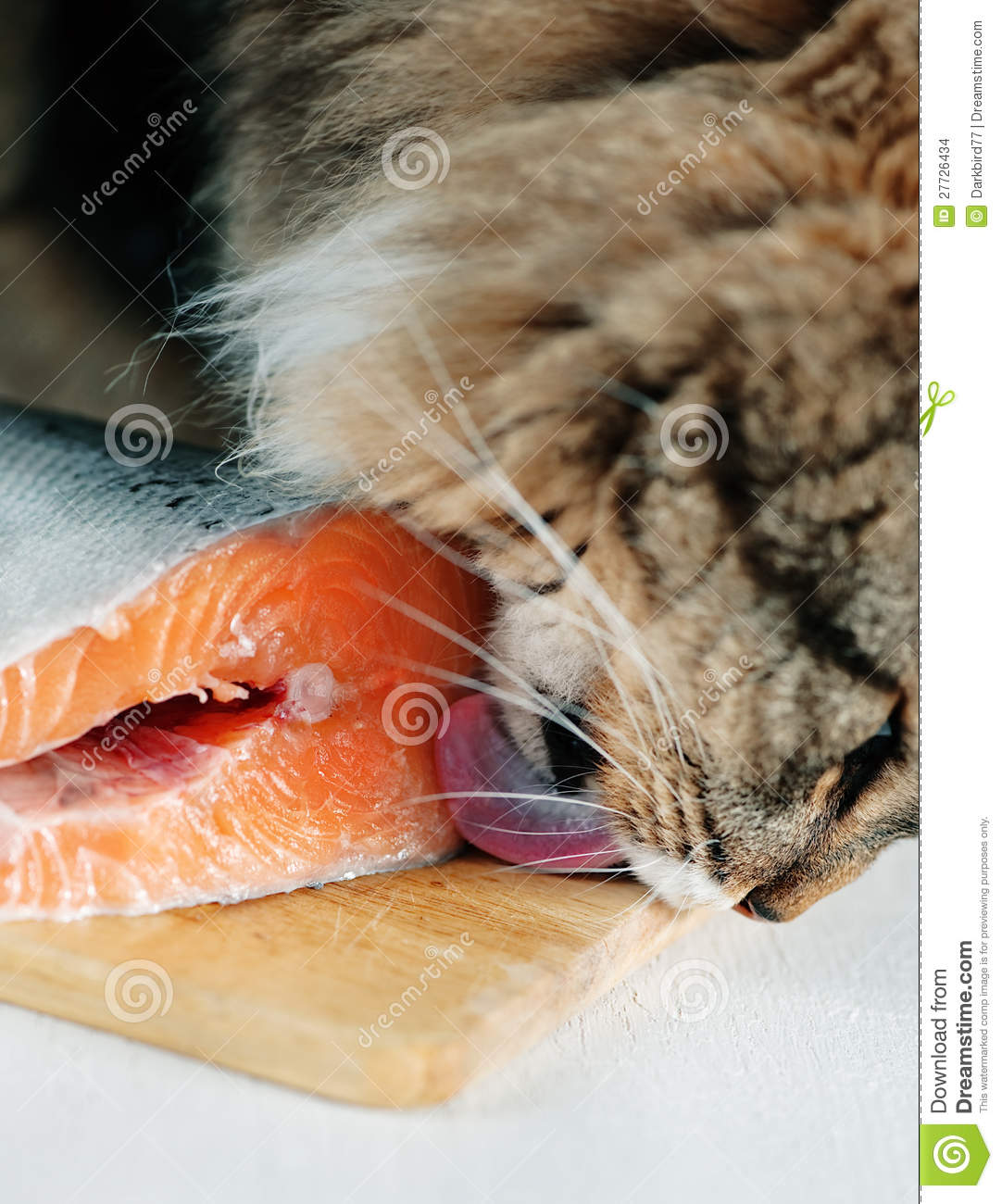 Cat licking piece of fish stock images image 27726434 for Piece of fish