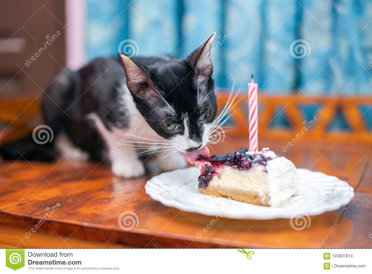 A Cat Licks Her First Birthday Cake