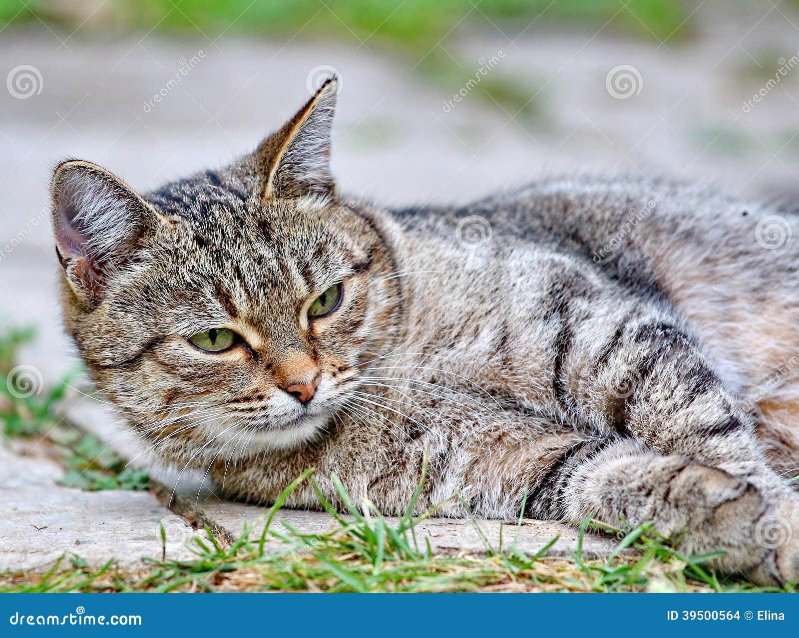Cat lies on the floor outdoor