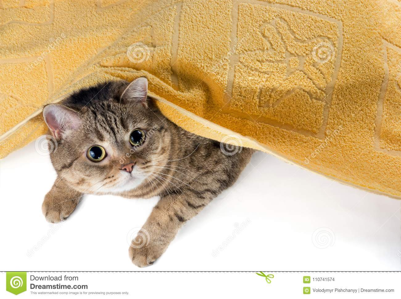The cat lies under a yellow terry towel