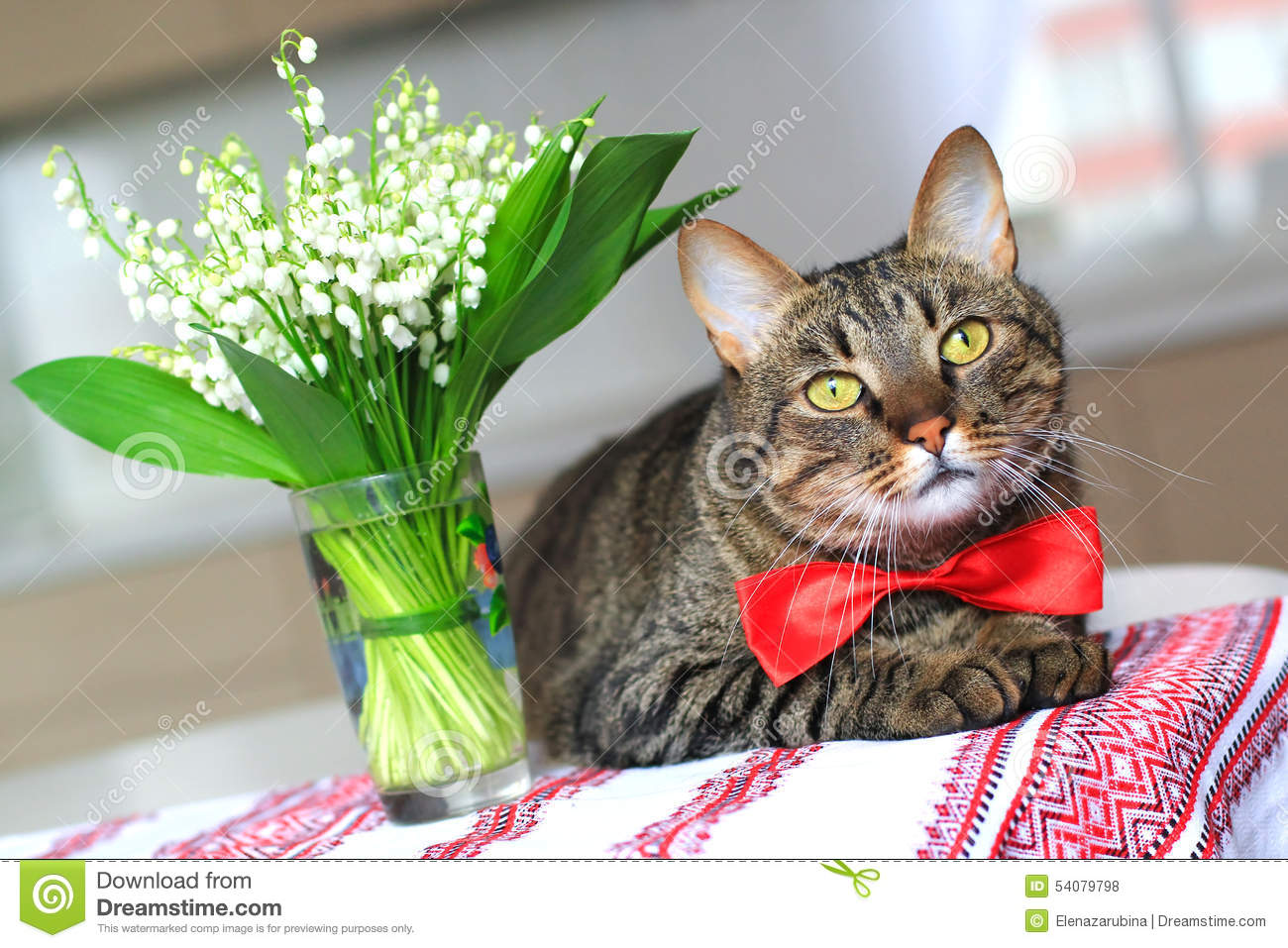 Cat And Lily Of The Valley Stock Photo Image Of Sweet 54079798