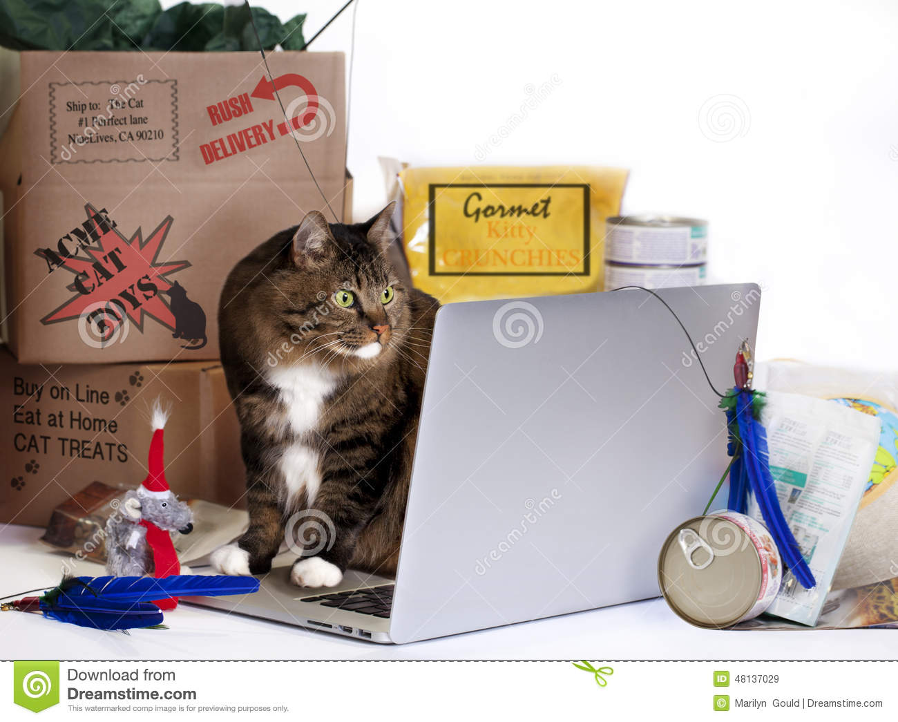 Cat On-Line Shopping Frenzy