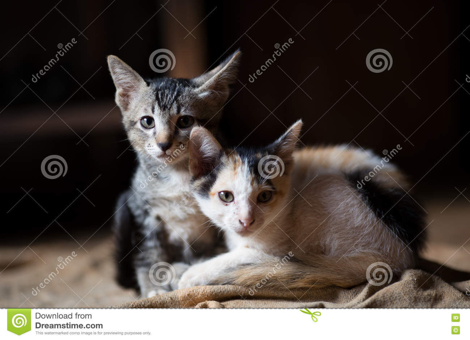 Cat,A little cats,Twins cats