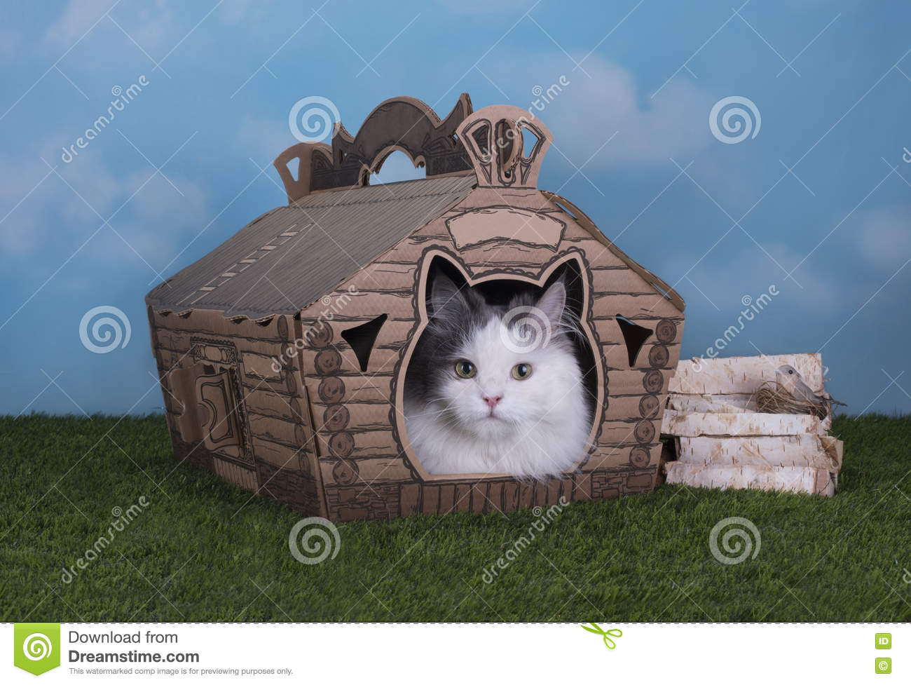 Cat lives in his own house in the village