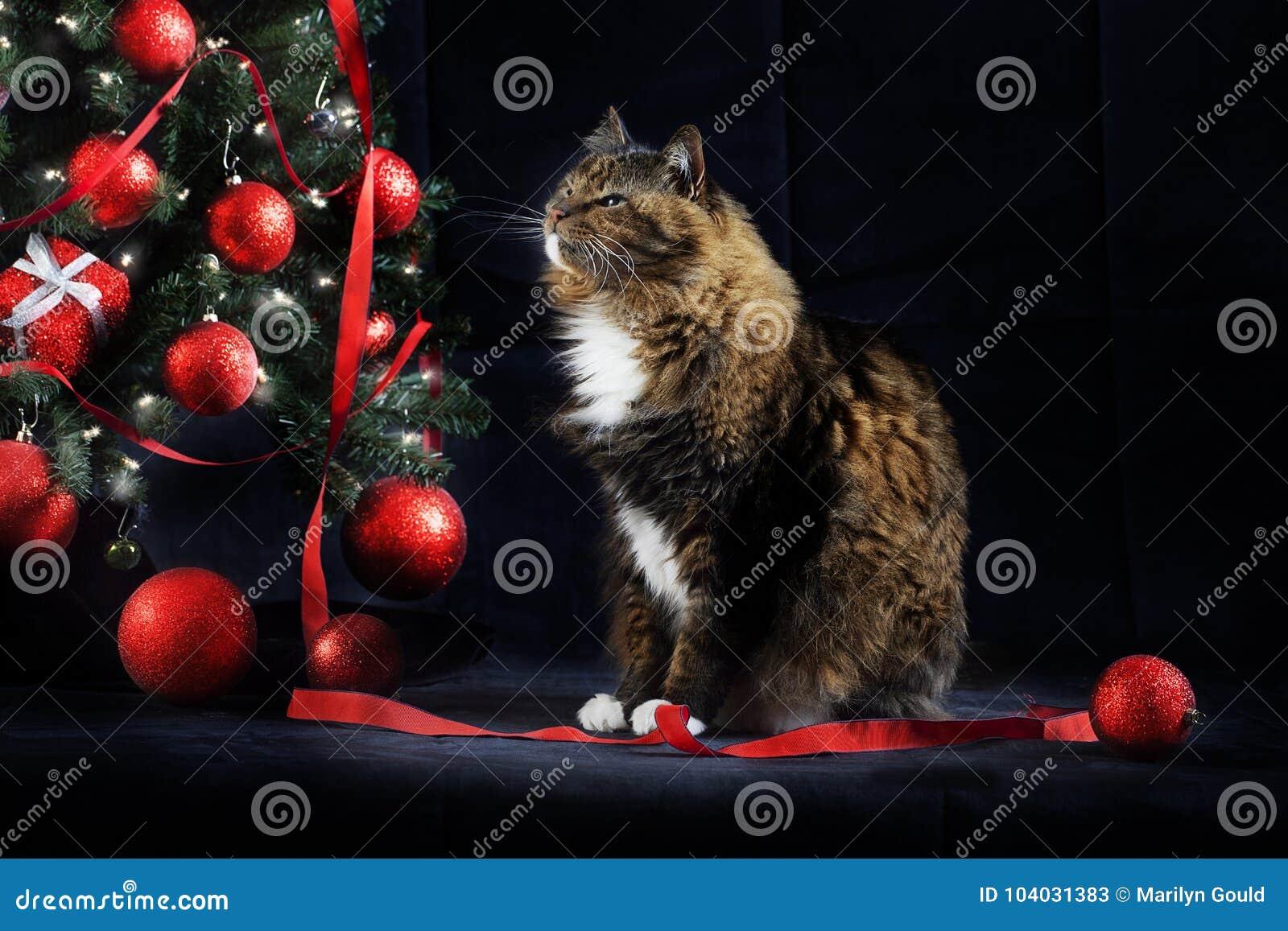 Cat Looking bij Kerstboom