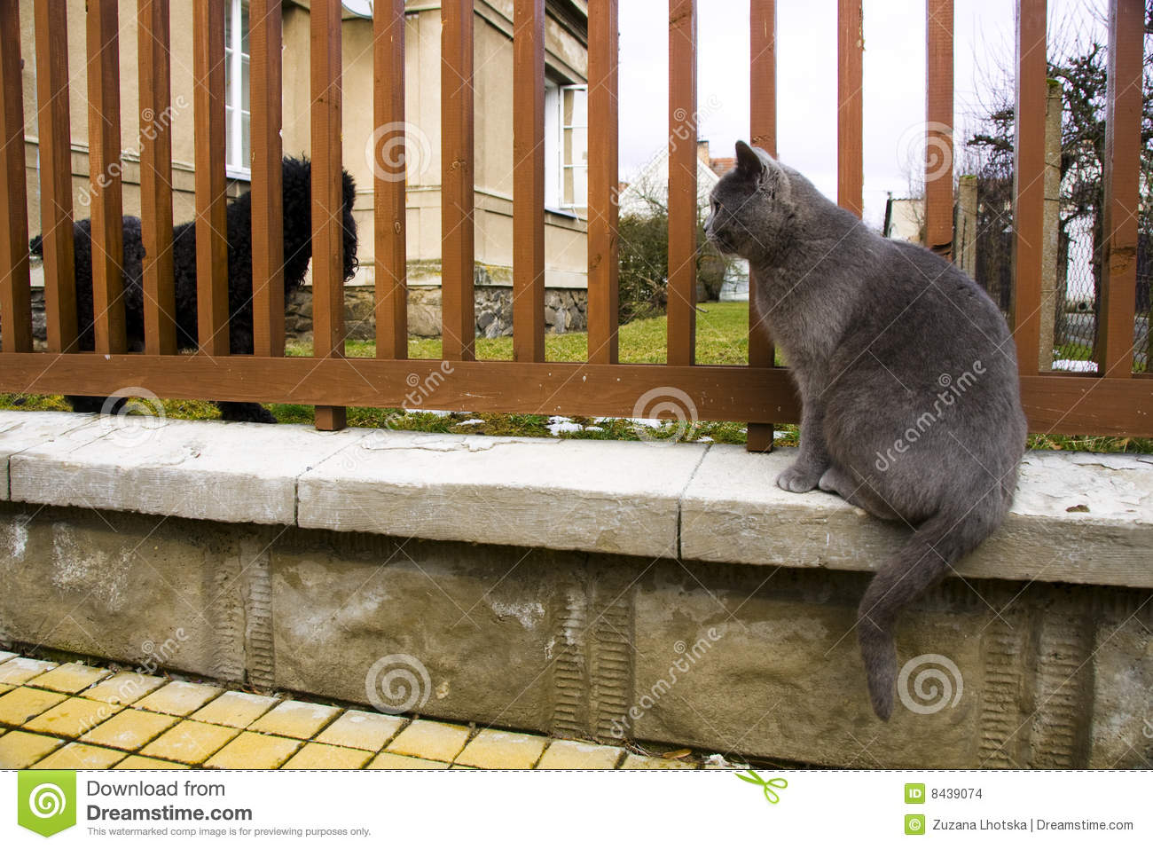 Cat looking at a dog behind a fence