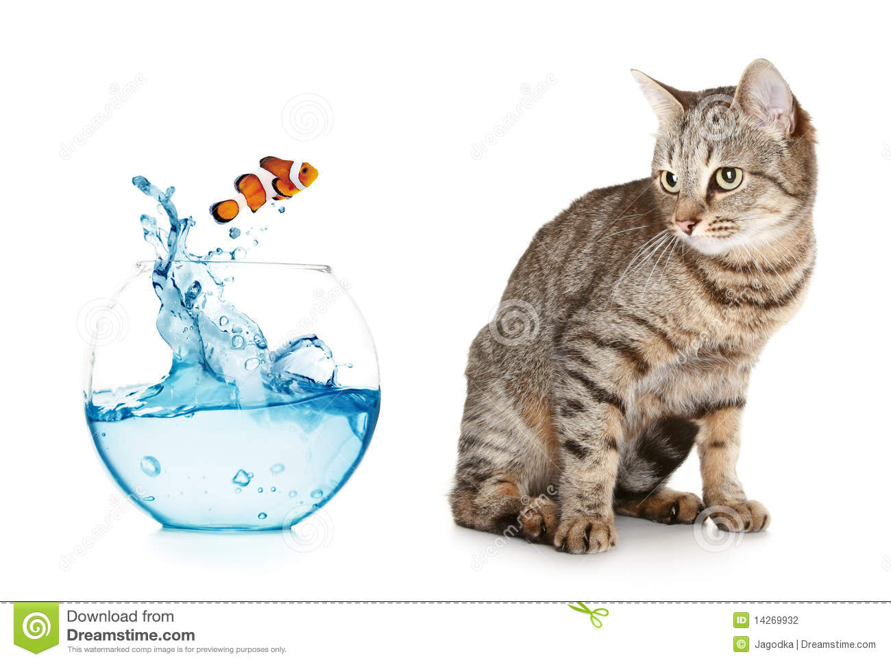 Cat looking at a fish jumping out of an aquarium stock for Fish videos for cats