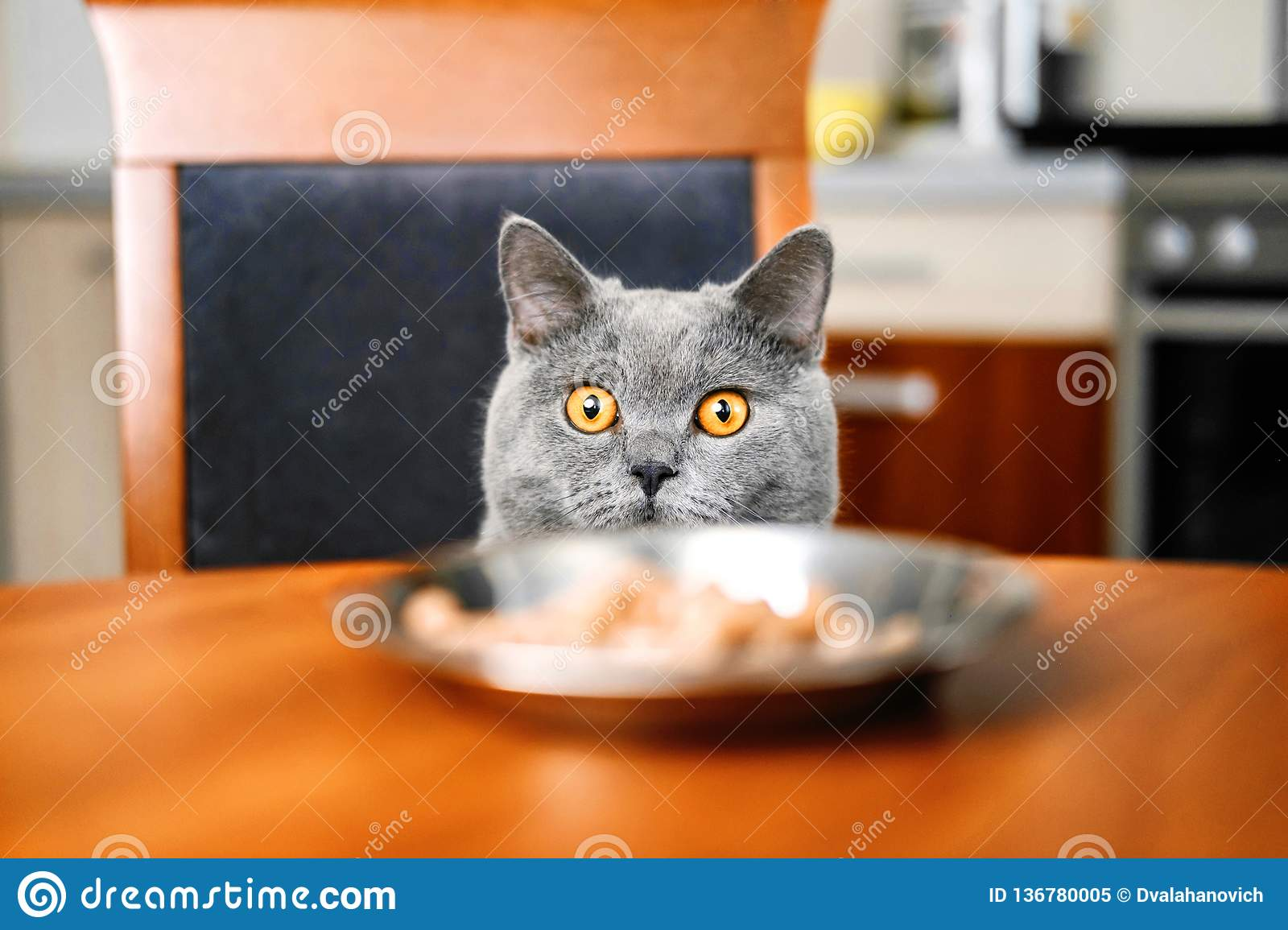 Cat is looking at food at the table