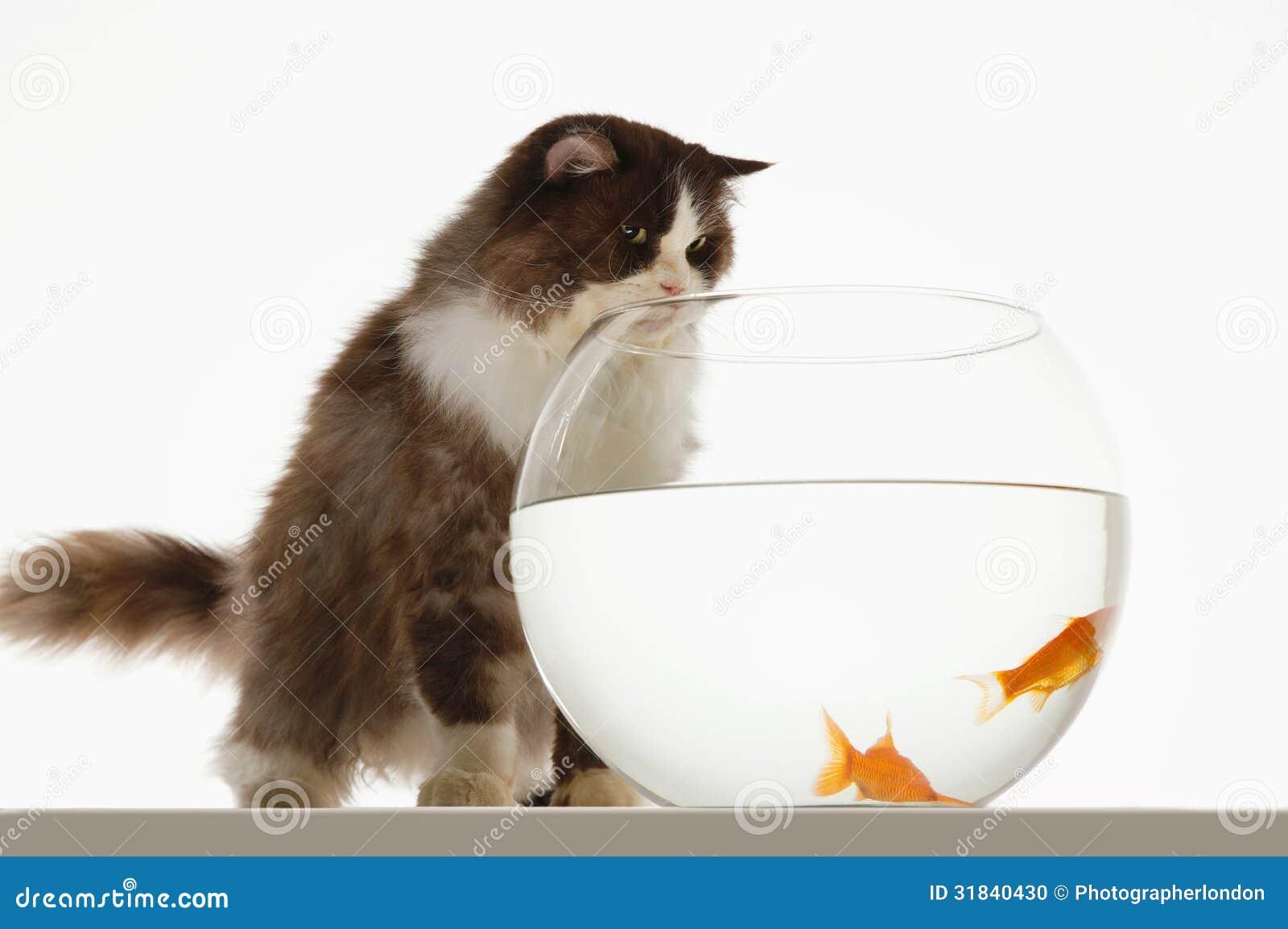 Cat In Glass Bowl Video