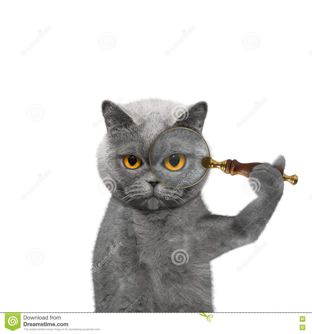 dcedd670 Cat Looking Through A Magnifying Glass Magnifier Stock Photo - Image ...