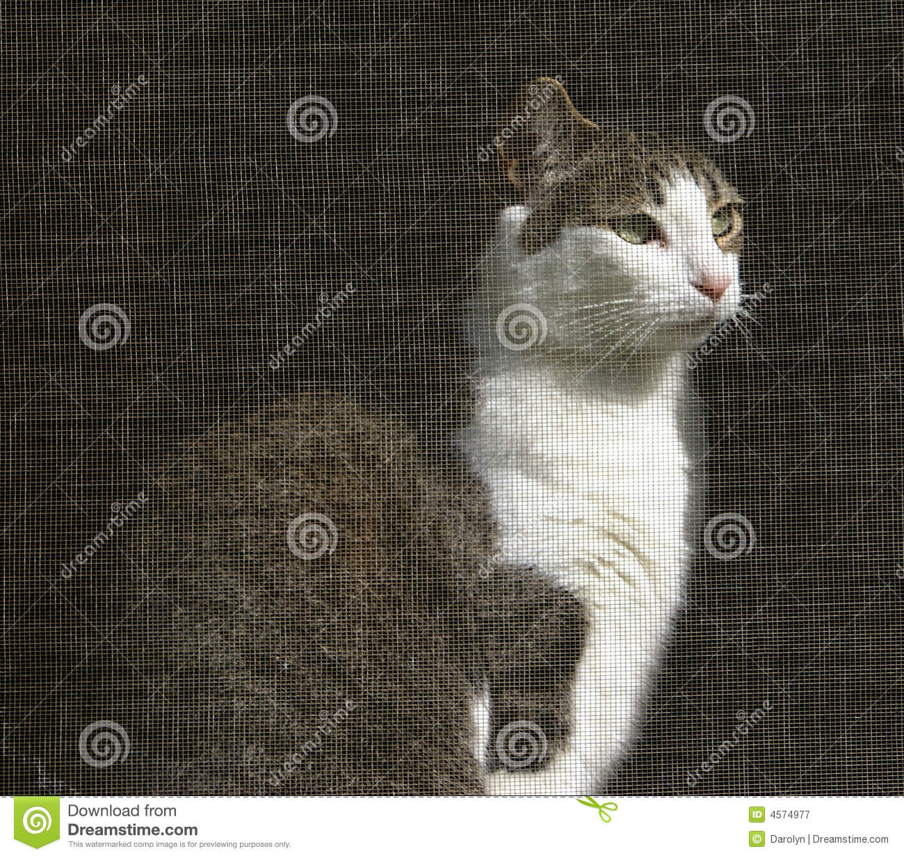 Cat Looking Out Of Screened Window Royalty Free Stock