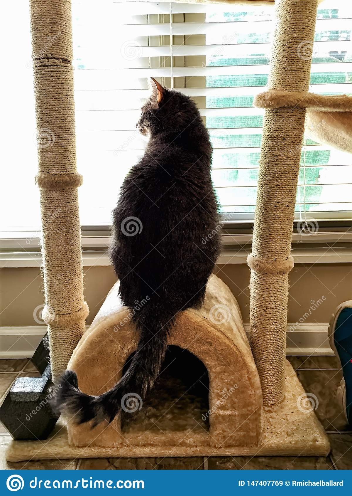 Cat Looking Out Window Longing a estar fora