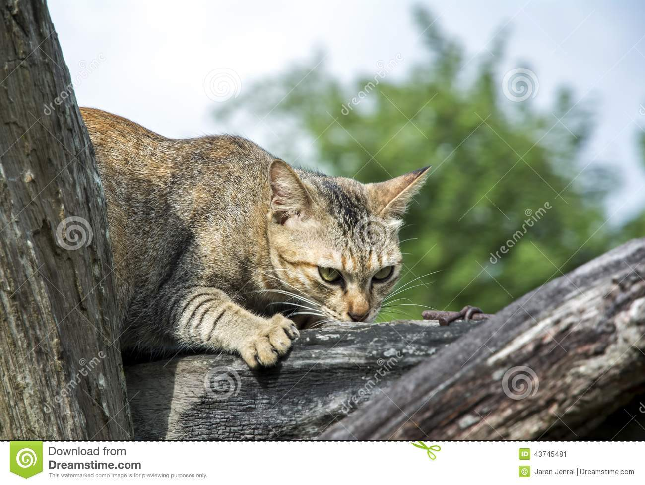 Cat Looking For Prey Stock Photo