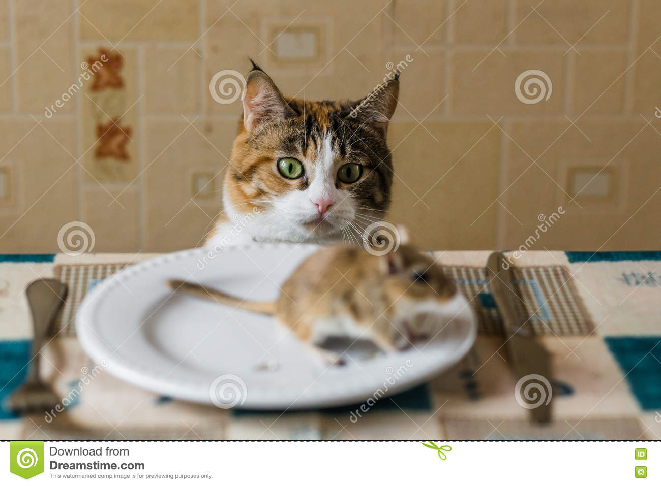 Cat Stealing Food From Plate
