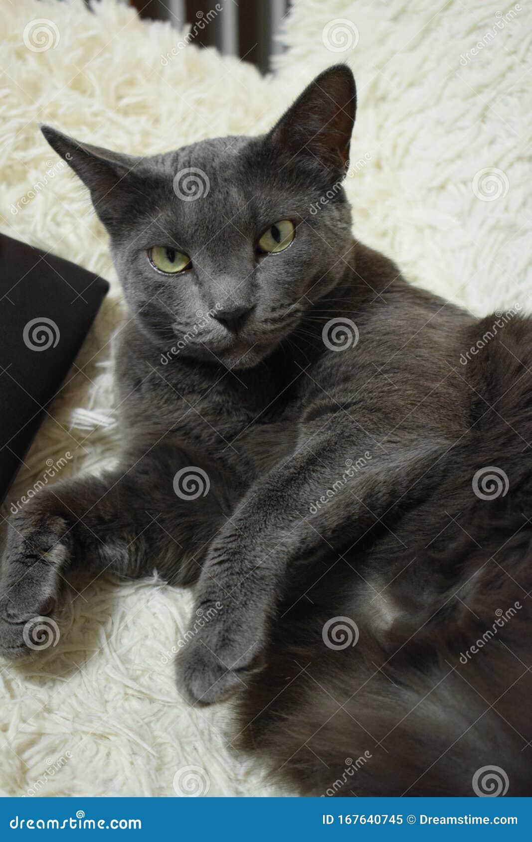 Lucy Cat Kostenlos