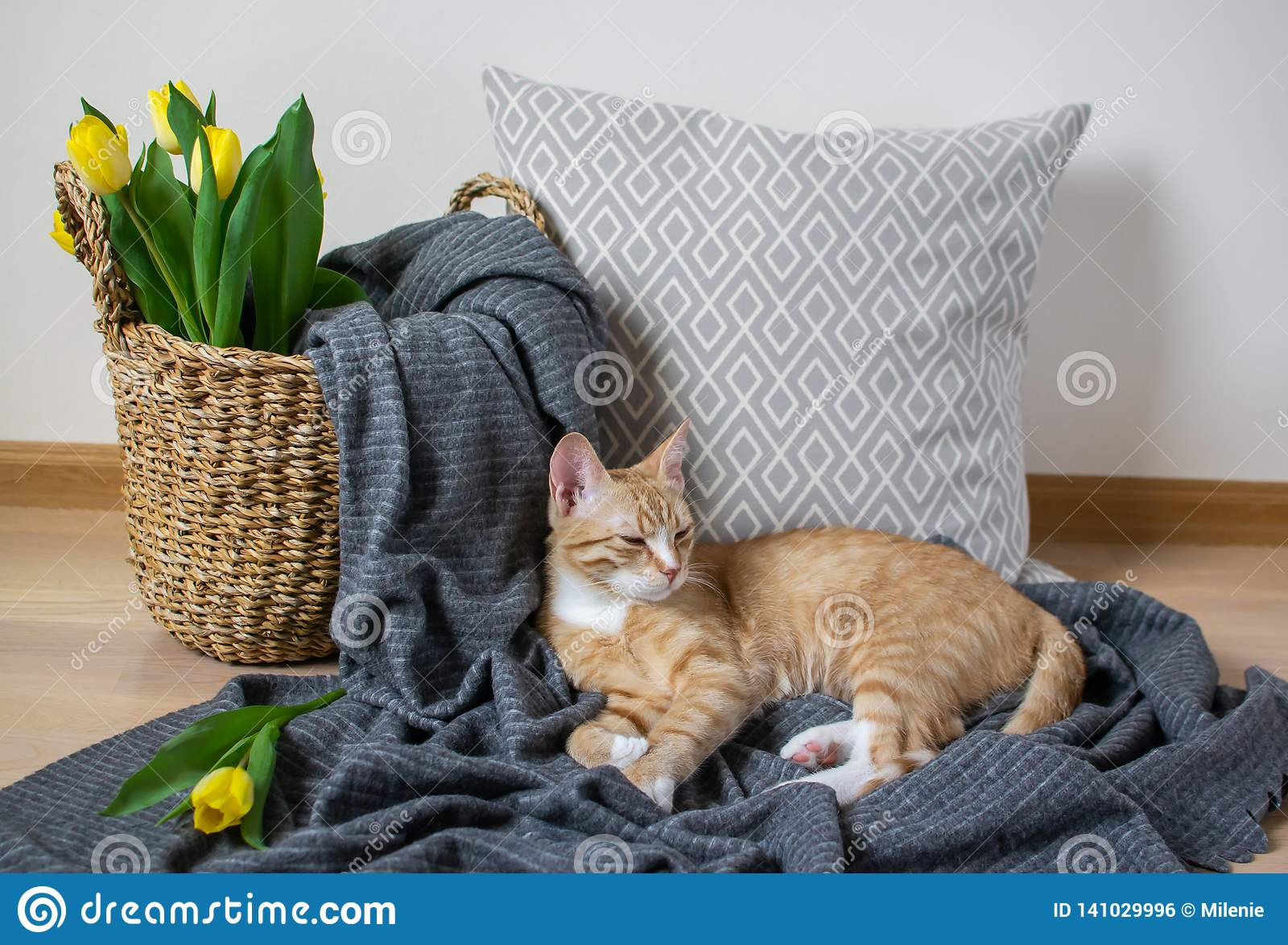 Cat Lying auf Gray Plaid Indoor, Cosiness