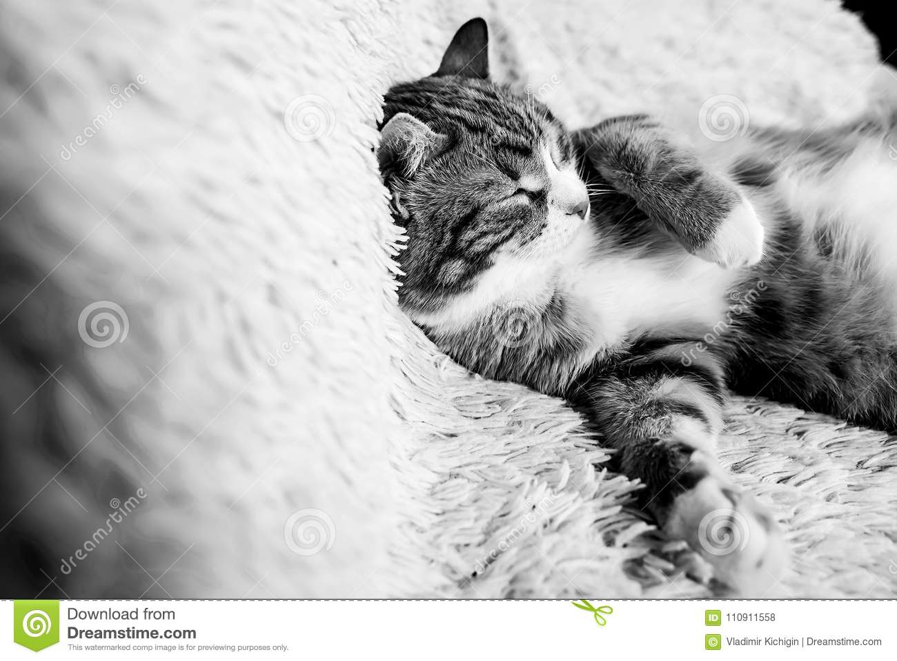 Cat Lying On Bed At Home.Red Cat Lying On The Bed. Pet On The Co ...
